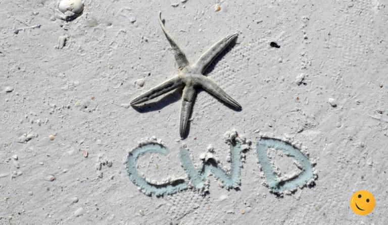 cwd on the beach