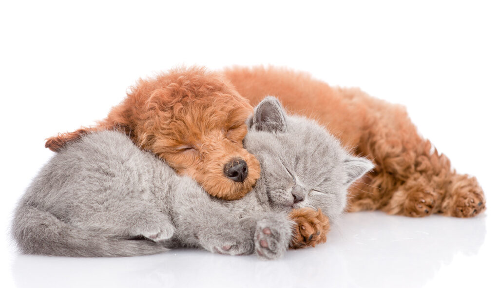 sleep and diabetes cat and dog